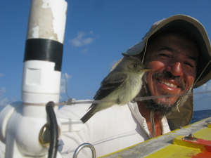 Image: A small migrating bird, perhaps a flycatcher, taking a rest on my boat...